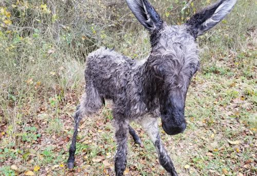 How to protect a newborn baby donkey in freezing weather