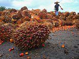 Palm oil industry is deploying tactics similar to those of the alcohol and tobacco industries