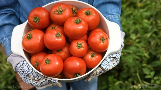 Researchers find that drinking unsalted tomato juice helps lower cardiovascular disease risk