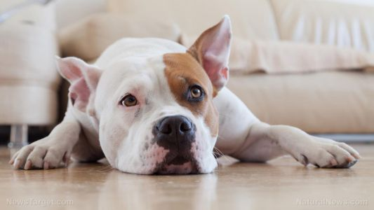 Natural flea and tick remedies that avoid exposure to toxic chemicals