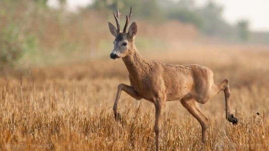 Neonicotinoids can cause severe birth defects in white-tailed deer, warn researchers