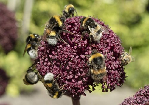 New research shows why flower diversity is important for bee conservation