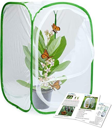 The Best Butterfly Kits For Observing Metamorphosis Magic