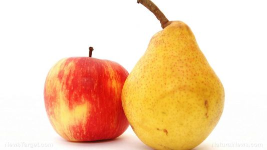 Eating apples and pears can reduce your risk of Type 2 diabetes