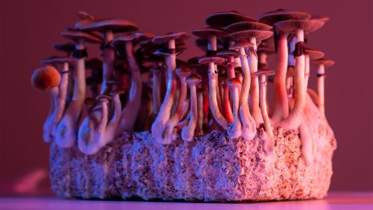 Can Magic Mushrooms Measure Up to SSRIs for Depression Treatment?