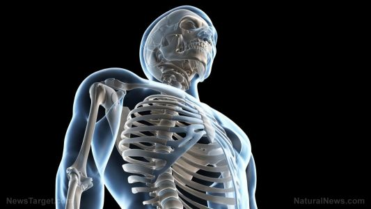 Curly dock found to help prevent osteoporosis