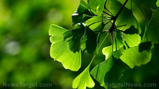 Herbal remedies for improving dilation of blood vessels in the brain