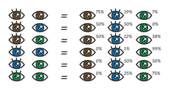 How to Predict Eye Color