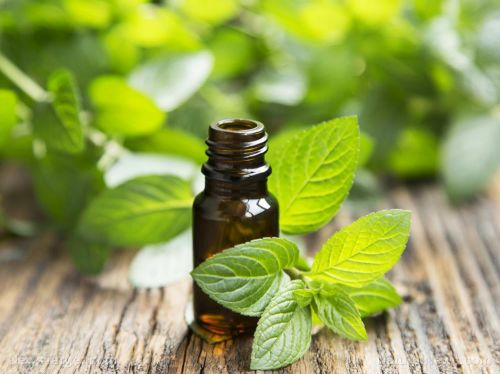 Ancient Egypt got it right with peppermint: Here are 15 conditions it can treat