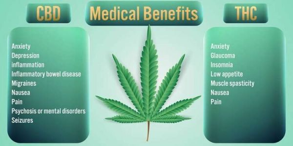 Which Has Better Health Effects THC or CBD in Marijuana?