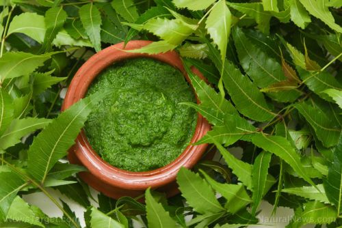 Treat skin conditions like psoriasis with these herbal remedies