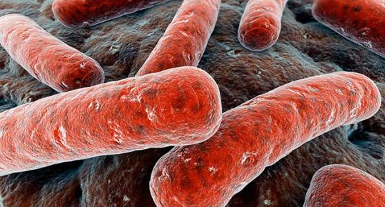 FDA: Infections, 1 Death After Fecal Transplants