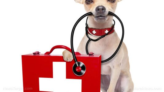 Do you have a first aid kit for your pets?