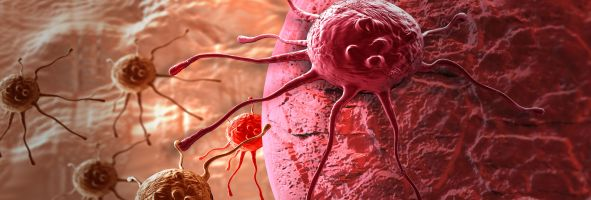 Women warned to avoid CADMIUM intake to prevent endometrial cancer