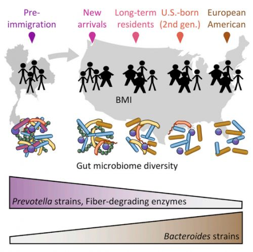 Just Months of American Life Change the Microbiome