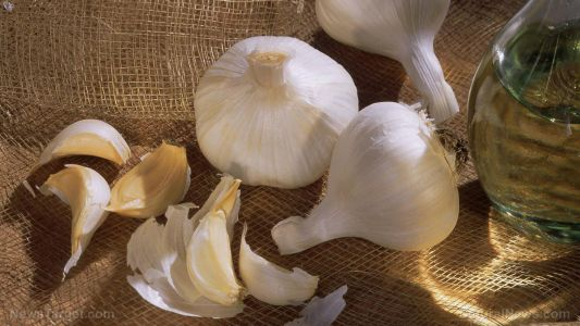 Garlic extract proven to decrease cardiovascular risk in the obese
