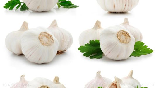 Garlic and bitter kola found to be effective at treating respiratory infections