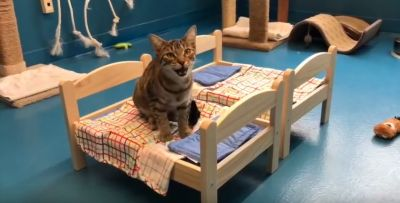 Ikea Donated Doll Beds To Shelter Cats And It's Too Cute For Words