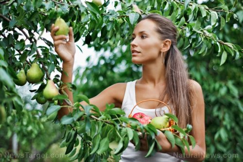 Long-term food independence: Fruit trees are a critical prep before SHTF