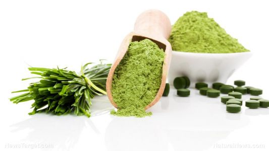 Wheatgrass helps manage cholesterol levels in menopausal women