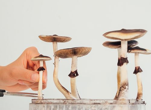 Can medically supervised psilocybin treatments address behavioral and psychiatric disorders?