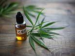 Legal cannabis oil sold in British health shops can get users high, study shows