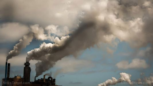 Babies exposed to air pollution while in the womb were found to have shortened telomeres, increasing their risk of disease