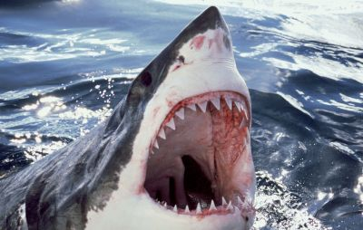Man Saves Wife By Punching Shark In Open Water