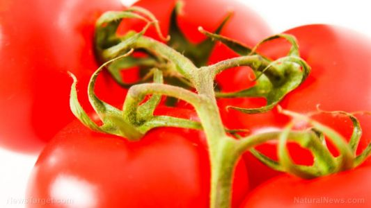Declared a vegetable by the Supreme Court, tomatoes are a world-wide staple with many widely known health benefits