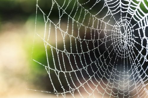 Survival first aid: How to treat spider bites