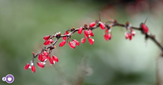 Berberine: It's amazing effects for women with PCOS