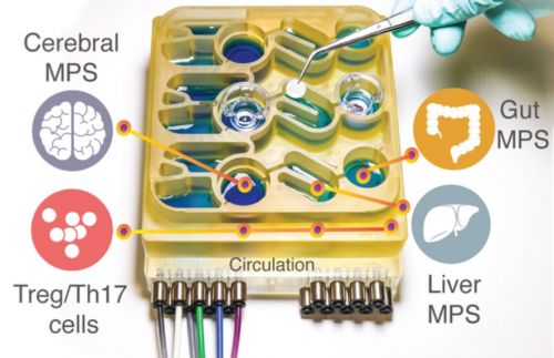 'Organs-on-a-chip' sheds light on gut microbiome's role in Parkinson's disease