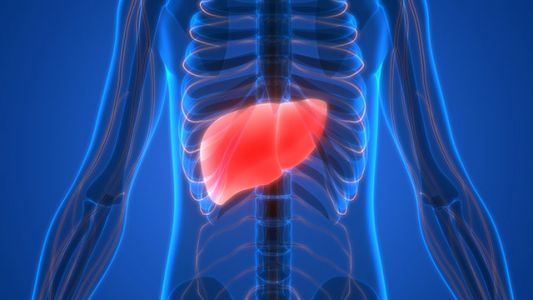 Treat your fatty liver disease naturally with a traditional Chinese herbal powder