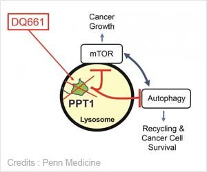 New Target Identified and New Drug for Cancer Therapies Developed