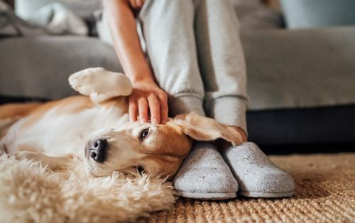 Pandemic boosts pet ownership, supercharges supplement market