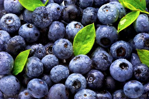 Want a younger brain? A polyphenol-rich extract of grape and blueberry found to reduce cognitive decline