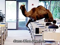 Need Help Through Hump Day? These Camel Jokes Have Your Back