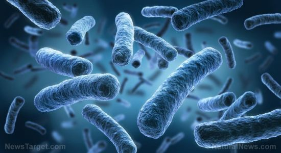 """How can a relatively """"harmless"""" gut microbe be dangerous to good gut bacteria?"""