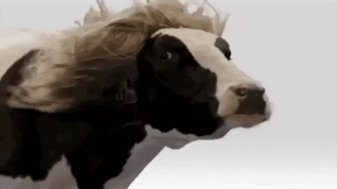 20+ Cow Jokes, Puns, And Riddles That Are Udderly Amoosing