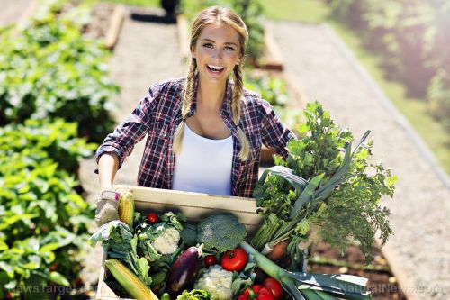 One seed at a time: Tips for growing your own vegetable garden
