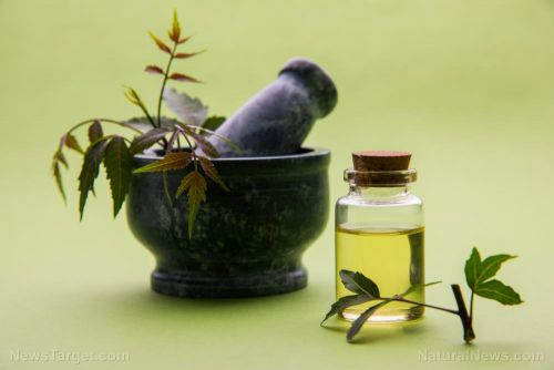 A potential remedy for rheumatoid arthritis may be found in this Ayurvedic medicine