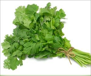 Molecular Component in Cilantro can Reduce Seizures: Study