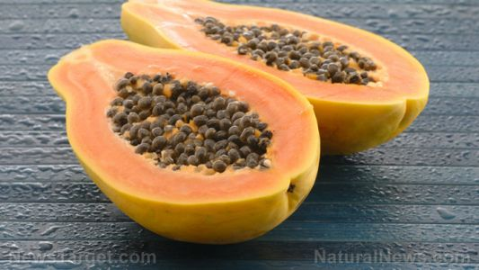 Papaya reduces cadmium-induced brain damage