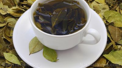 Green tea catechins found to protect the brain from cognitive decline