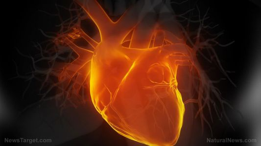New study reveals the vital role vitamin K2 plays in heart health