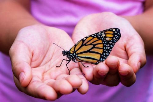 Start Planning Your Butterfly Garden Now