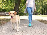 Dog owners are suffering hand injuries because they're holding their leads wrong