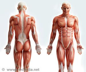 Muscle Mass Plays a Key Role in a Person's Overall Health Status