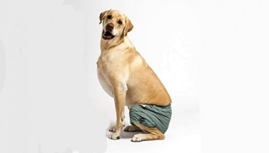 You Can Buy Swim Trunks For Your Dog And Honestly, What Are You Waiting For?