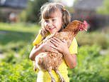 Louder for the people in the back: Stop 'kissing and snuggling' chickens, CDC warns